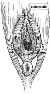 vagin vaginisme paris vaginisme chirurgie esthetique paris vaginisme chirurgien esthetique paris dr federico loreto