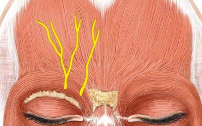 Comment les injections de Botox peuvent rajeunir le regard et le visage ?